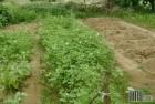 veggie garden f