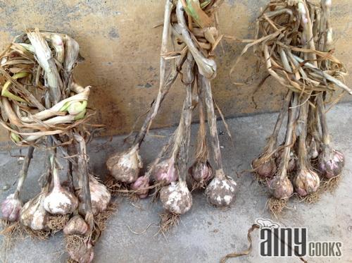 m garlic